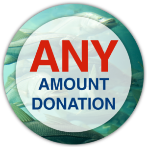Armchair Anglers Wheelchair Accessible Fishing Charters Donate Please